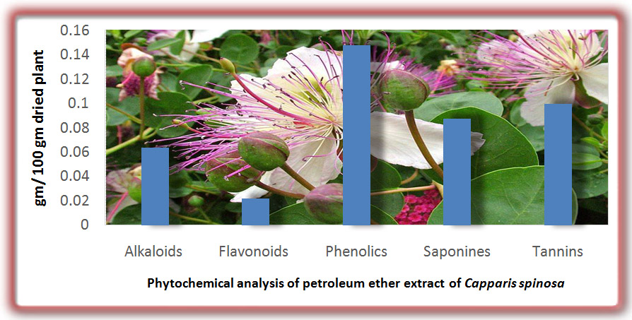 Evaluation of the biological activity of Capparis spinosa var. aegyptiaca essential oils and fatty constituents as Anticipated Antioxidant and Antimicrobial Agents