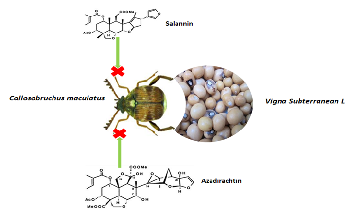 The bioactivities of the neem (seeds and leaves) against Callosobruchus maculatus on a Vigna Subterranean L.