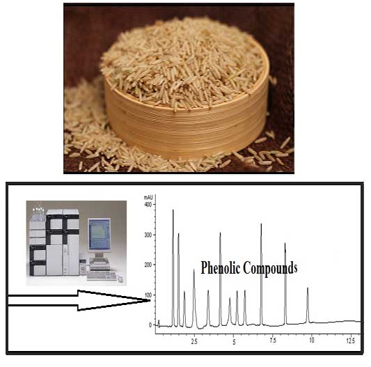 Determination of Important Phenolic Compounds in Pakistani Brown Rice Varieties in Controlled, Germinated and Fermented Conditions by High Performance Liquid Chromatography