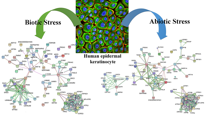 Biotic / Abiotic Stress Influences on Human Epidermal Keratinocyte Cells