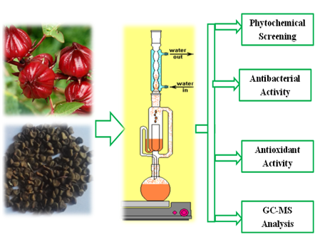 Phytochemical Analysis, Antibacterial and antioxidant Activities of Essential Oil from Hibiscus sabdariffa (L) Seeds, (Sudanese Karkadi)